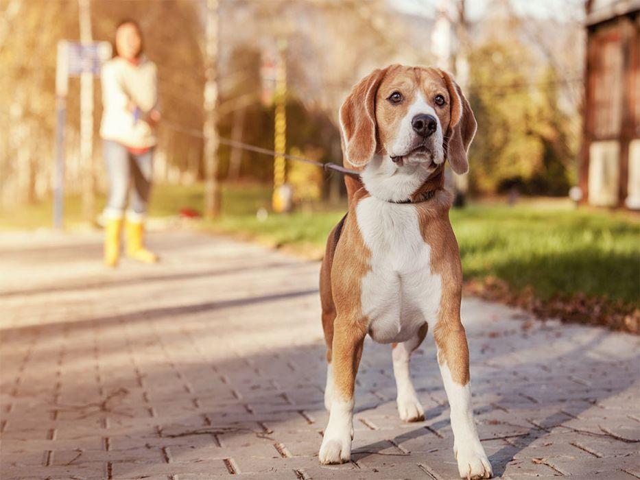 Passeador de caes/ dog walker