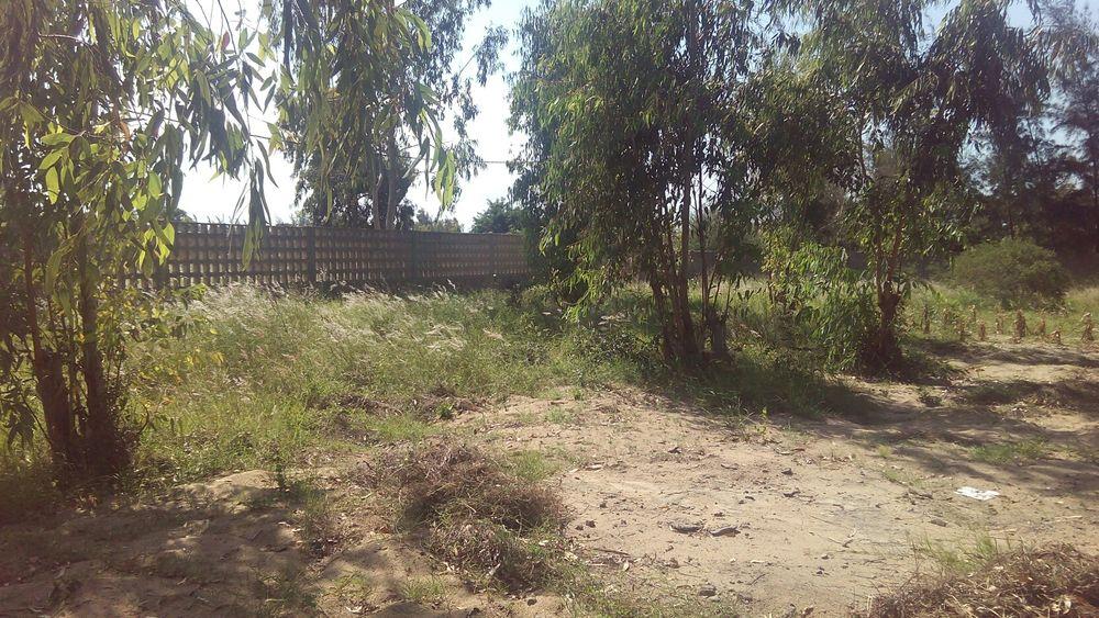 Vende-se uma propriedade de 100mx70m vedados em Marracuene-Kumbeza