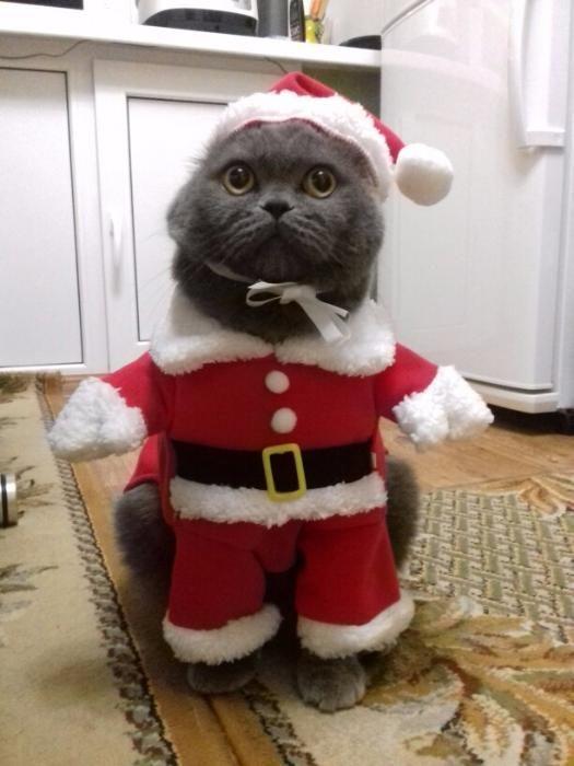 Costum Mos Craciun caine sau pisici
