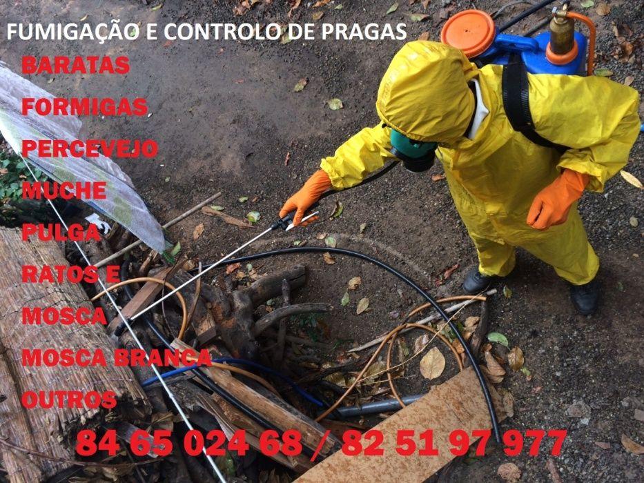 Fumigação e controlo de pragas.