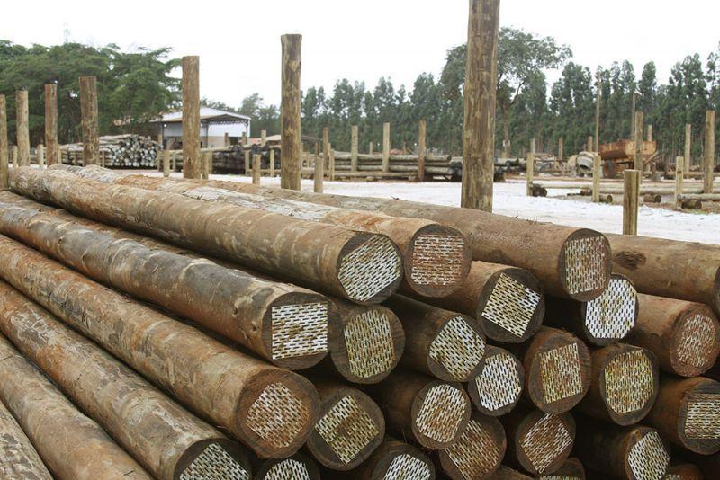 Postes de eucalipto tratados,Energia,Esplanadas,vedação (2.40m-13m) #P