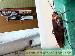 Desinfestação de Formigas & Baratas ( GEL ALTAMENTE ATRATIVO E FATAL )
