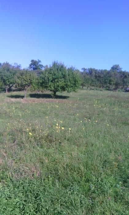 Vanzare  terenuri constructii  5800 mp Bistrita Nasaud, Herina  - 7 EURO