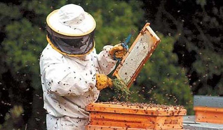 Mediu învățare apicultura