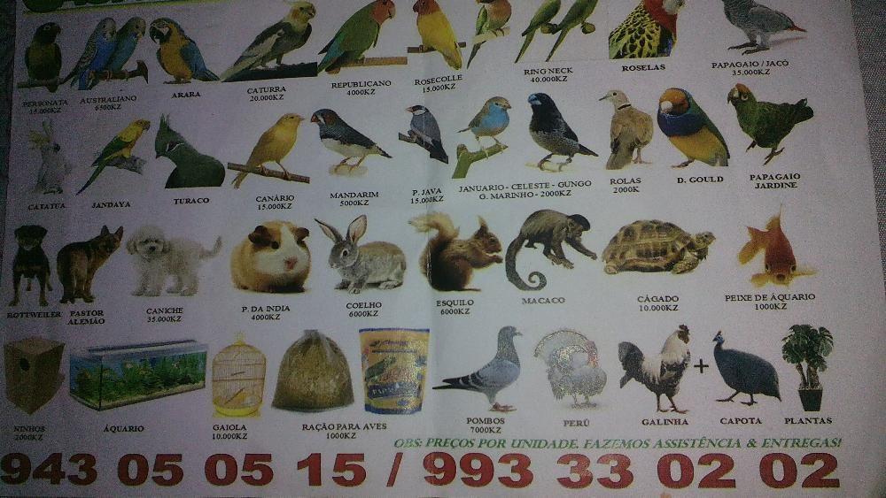 Passaros, pombos, caes, roedores