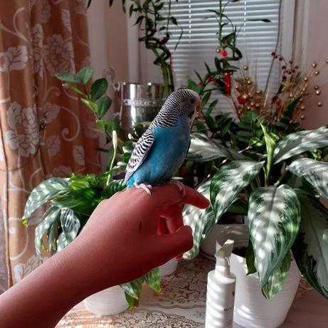 Продаются попугаи!