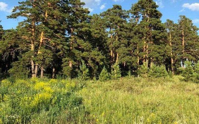 Срочно!!! Горящий вариант!!! Участок для Дачи возле леса Акколя.