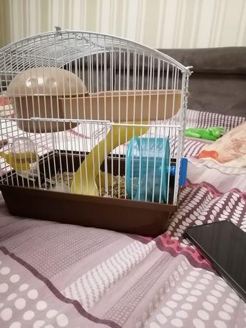 4 Хомячка и домик