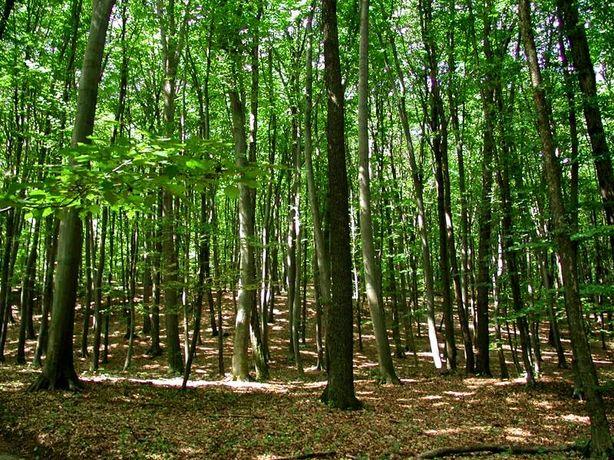 Vand Pădure în Comuna Ususau