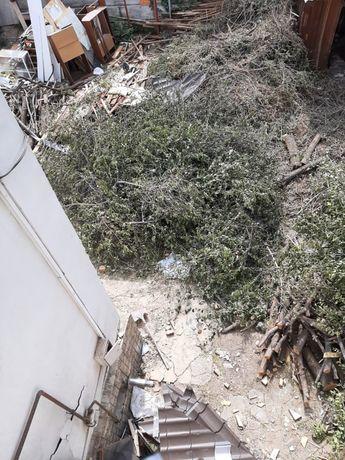 Дерево обрубленный
