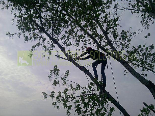 Tăiere copaci defrisari
