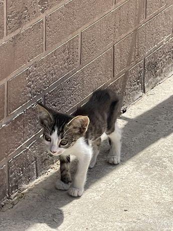Котенка