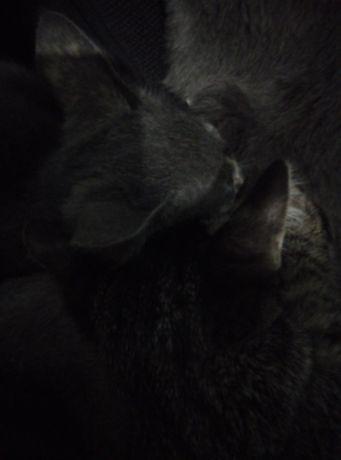 Маргау 3 ай кыз котенок 3 мес девочки разных окрасов
