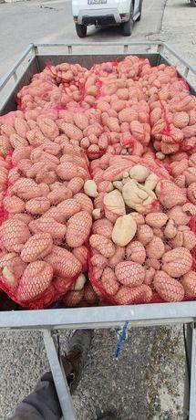 Cartofi 1 leu/kg