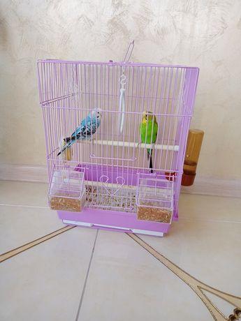 Продам папугай 2шт +клетка за 10.000т