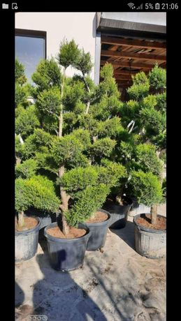 Vand o gama foarte mare de plante ornamentale
