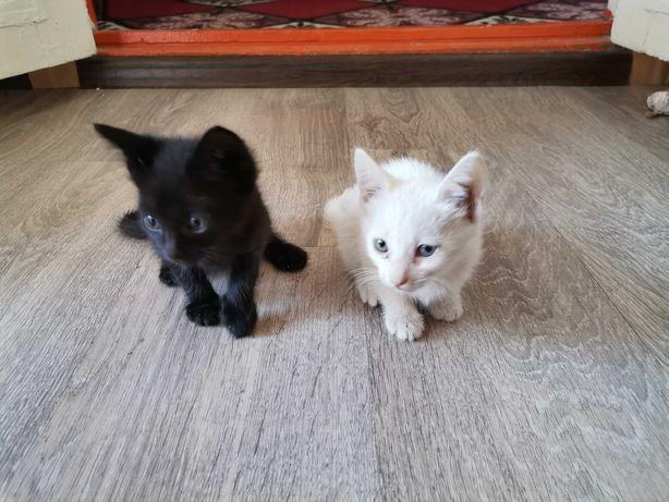 Кошки Котята Котенок Белый и Чёрный