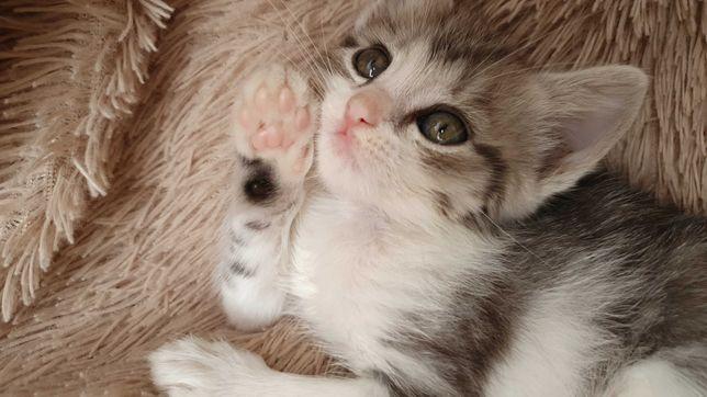 Отдам в добрые руки котенка девочку