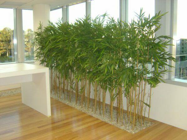 Bambus ornamental