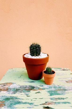 Aranjamente si decoratiuni cu plante / cactusi / suculente