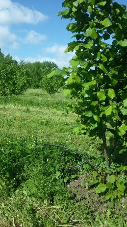 лешникова градина