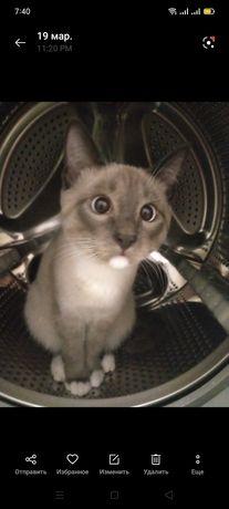Отдам даром сиамского кота