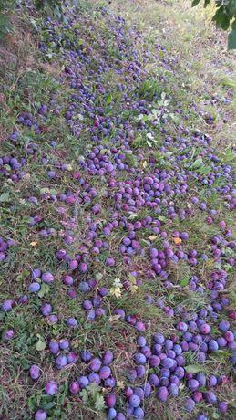 Vand prune de palinca calitate superioara