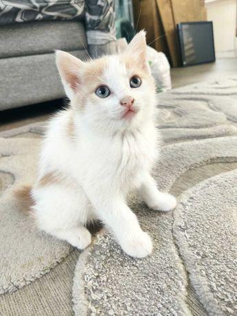 удивительно милый котенок