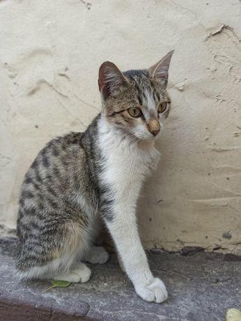 котенок в поисках дома, срочно