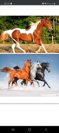 Обменяю лошадей на спецтехнику 3в1 cat. Terex. Hidromek. Jsb