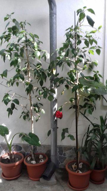 Plante exotice decorative