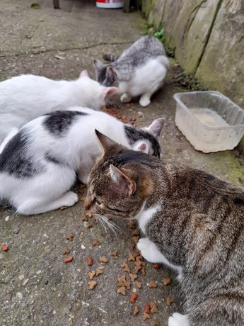 Donez pisici (varsta de 4 luni)