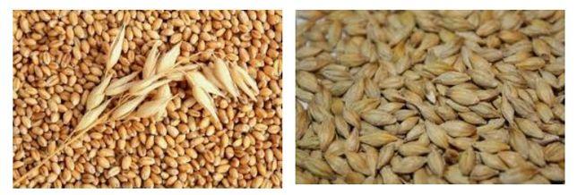 Продам ячмень и зерно отходы