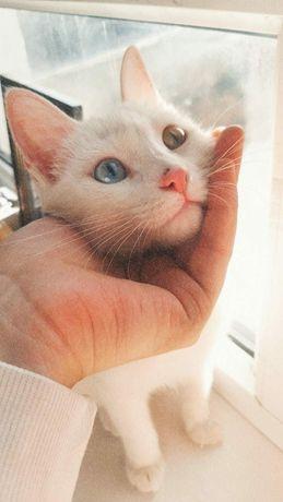 Котенок, 10 месяц.