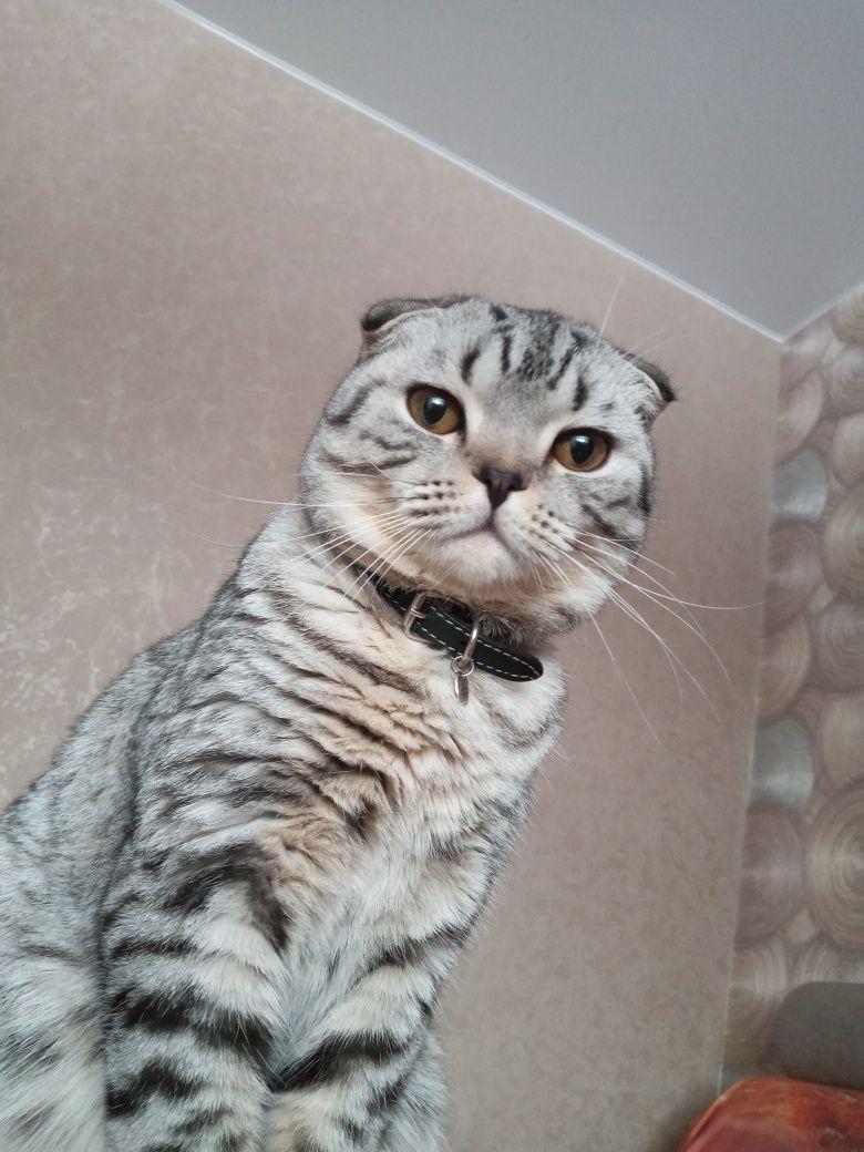 Кот на вязку