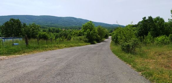 Лозе в село Велика, Община Царево