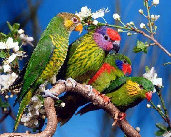 Приют для попугаев от мелких до крупных