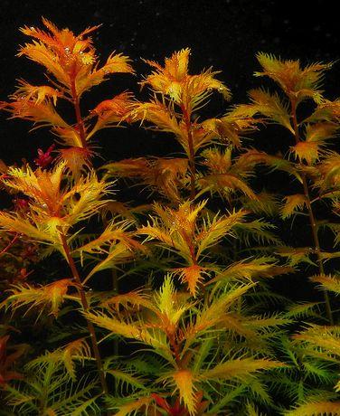 Fertilizare completa micro-macro-fier Plant Serum plante de acvariu