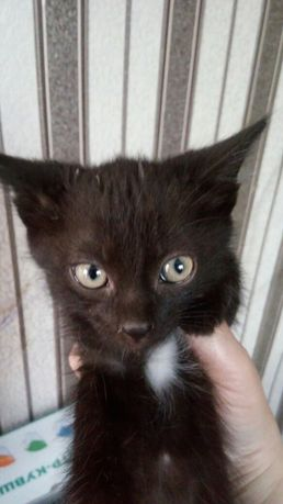 Котята черные 3 штуки