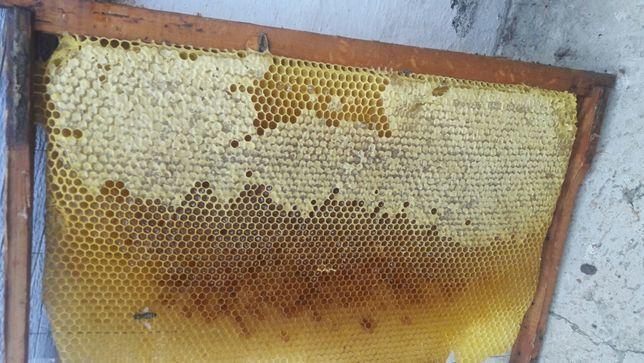 Обмен. Обменяю мёд на автомобиль.