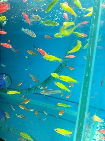 Аквариумные рыбки в Афалине