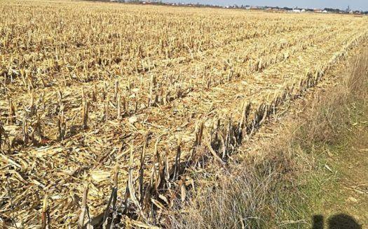 Arendam Teren agricol in jurul comunei Craidorolt