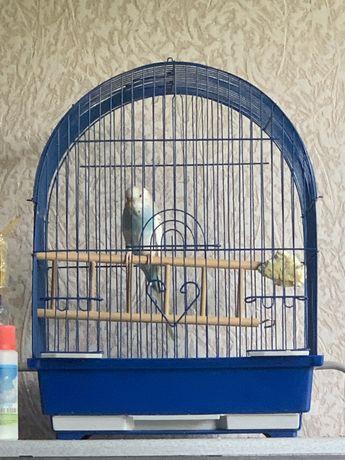 Продам волнистого попугая с клеткой 12000 тг