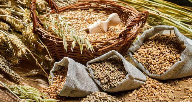 Продам пшеницу и зерноотходы