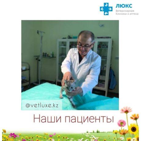 """Ветеринарная клиника """"ЛюКс"""""""