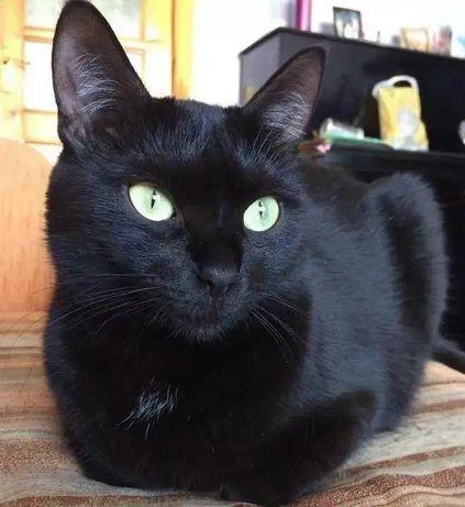 Черный котик молодой 10 месяцев