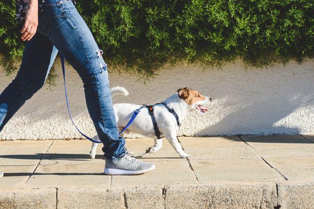 Услуги по выгуливанию животных