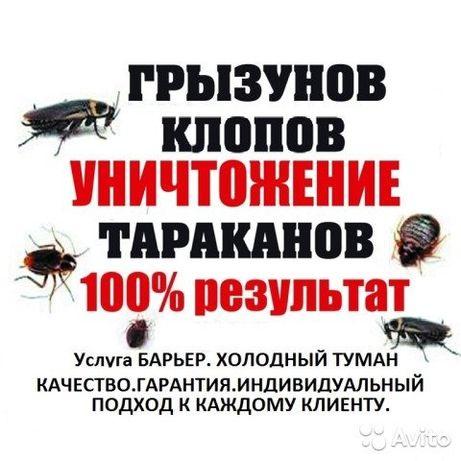 Уничтожение клопов, клещей, тараканов, муравьев, мышей, крыс