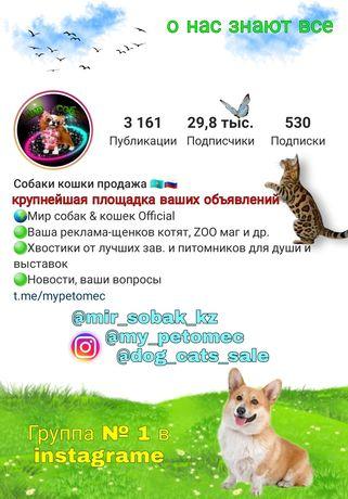 Кошки собаки группа в инстаграмме