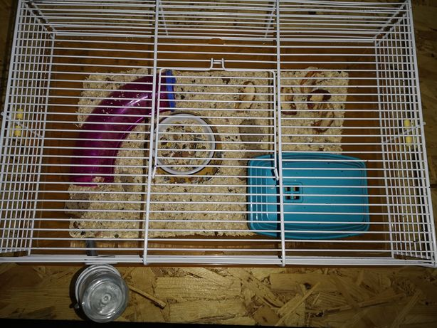 Colivie hamsteri